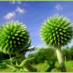 Növény a kutyavárnál