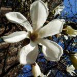 Itt a tavasz