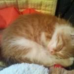 Az új cuki cica