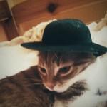 Az izraelita cica