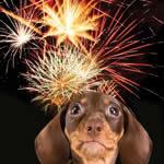 Állataink és a tűzijáték